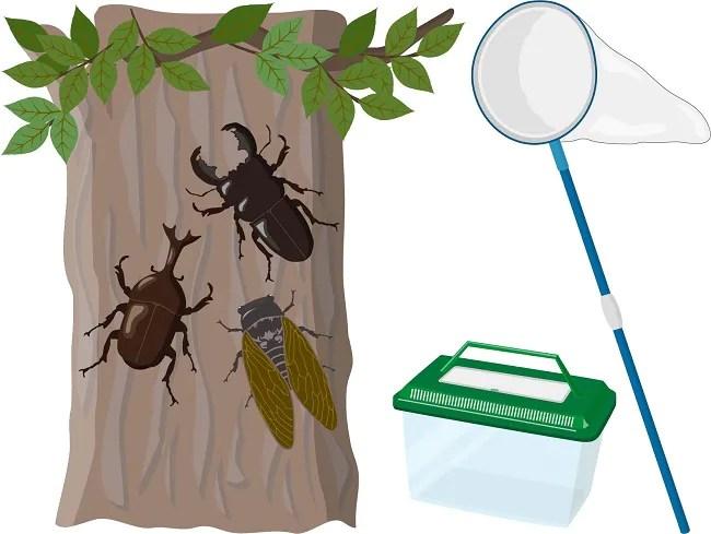 昆虫採集のイラスト