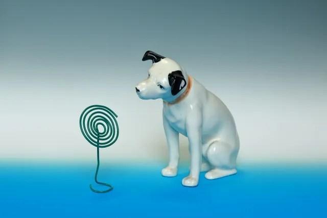 犬と蚊取り線香の写真