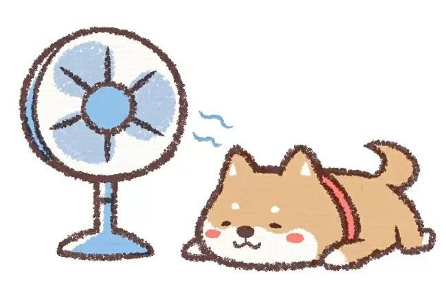 夏キャンプでの犬の熱中症対策