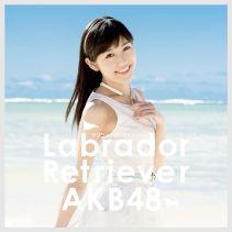 Akb48 Labrador Retriever 4