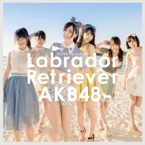 Akb48 Labrador Retriever K