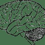 脳神経伝達物質