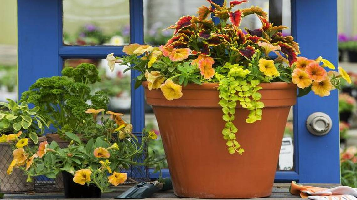 How To Make The Perfect Container Garden For Mother's Day