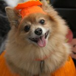 FREE Boos, Barks, & Badges Halloween Parade