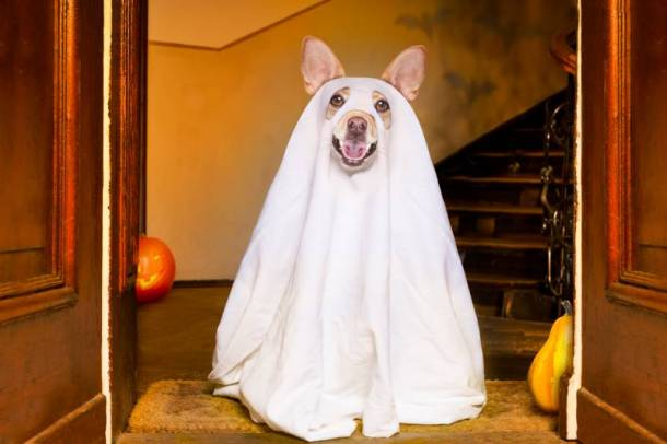 Kansas City Halloween for dogs - dog in ghost costume