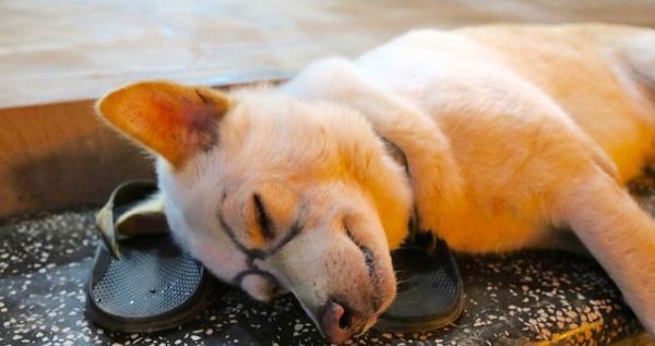 元Amazon社員に聞いた。強い眠気に打ち勝つ対処方法
