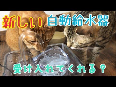 猫たちに新しい自動給水機をプレゼントしてみた!