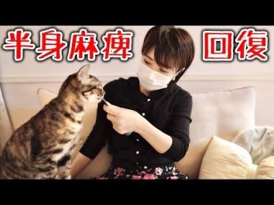 北海道で下半身麻痺の子猫を保護して一年立派なおてんば娘になりました!  supernabura
