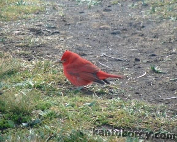 Antisana nevado ecuador venados fauna leonardo vivar ayora