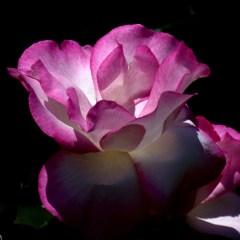 Flores (fotos)