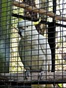 Cockatoo at Lone Pine Koala Sanctuary Brisbane
