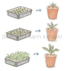園芸イラスト