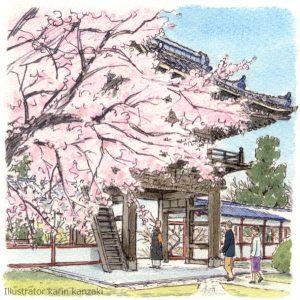 桜 風景 イラスト