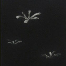 Journey・旅 Etching・Aquatint・spit bite エッチング・アクアチント・スピットバイト image size H64.4cmxW26.4cm ed.10 2009