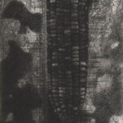 Sepia Corn・セピアのとうもろこし Mezzotint・Etching・Spit bite・Gampi-Paper(Mino) メゾチント・エッチング・スピットバイト・雁皮刷り・美濃和紙 image size H14.6cmx6.2cm ed.30 2010