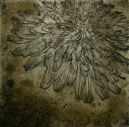Dandelion sepia・たんぽぽセピア Etching・Spit bite・Two plates two colors・Gampi-Paper(Mino) エッチング・スピットバイ ト・2版2色・雁皮刷り・美濃和紙 image size H12.9cmxW13cm ed.30 2011