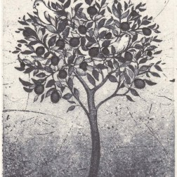 The tree・樹 Etching・Aquatint・Gampi-Paper(Mino) エッチング・アクアチント・雁皮刷り・美濃和紙 image size H10.9cmxW7.6cm ed.30 2015