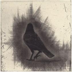 Crow 02・カラス Mezzotint・Etching・Gampi-Paper(Mino) メゾチント・エッチング・雁皮刷り・美濃和紙 image size H11.4cmxW11.4cm ed.30 2011