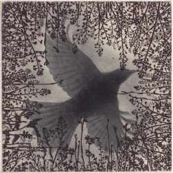 Bird・鳥 Etching・Mezzotint・Two plates two colors・Gampi-Paper(Mino) エッチング・メゾチント・2版2色・雁皮刷り・美濃和紙 image size H10cmxW10cm ed.30 2014