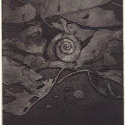 Shell 03・貝 03 Etching・Aquatint・Gampi-Paper(Mino) エッチング・アクアチント・雁皮刷り・美濃和紙 image size 14.5cmx9.8cm ed.30 2013