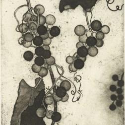 Wild Grapes・山葡萄 Etching・Aquatint・Gampi-Paper(Mino) エッチング・アクアチント・雁皮刷り・美濃和紙 image size 13.3cmx11.4cm ed.30 2013