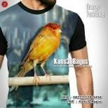 Kaos KENARI, Kenari Yorkshire Orange, Kaos BURUNG, Kaos3D, Kenari YS