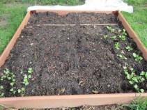 Radishes, carrots, beets & turnips