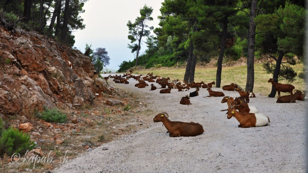 Skopelos  - naše výlety
