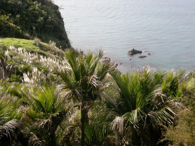 Mangawhai heads walk