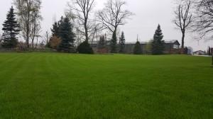 Grupa Kapias trawnik