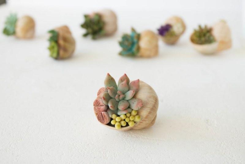succulent-kutu-2