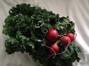 Produce from the farmer's market