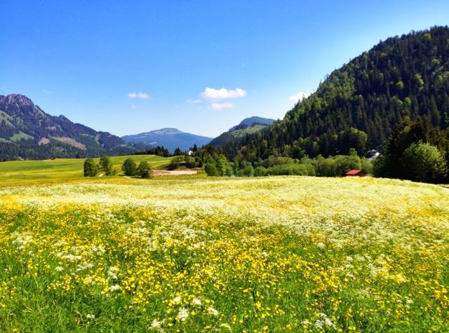 austria 8