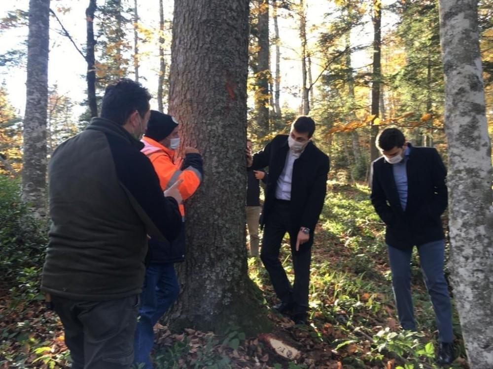 Kaymakam Erdem ve cumhuriyet savcıları ormanda damga ve üretim faaliyetlerini inceledi