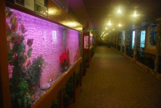 Image result for askari park karachi aquarium
