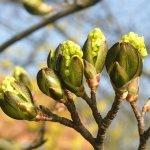 整体:花粉症 ~今や春の風物詩~