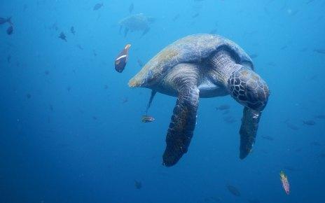 jūras bruņurupuči