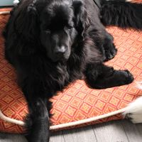 Chillywacker