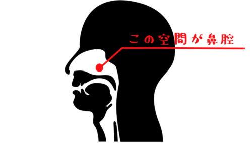 鼻腔の場所