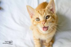 Kitty Yawn