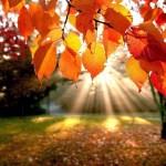La salle du Tertre est indisponible dimanche 15 octobre pour l'entraînement libre