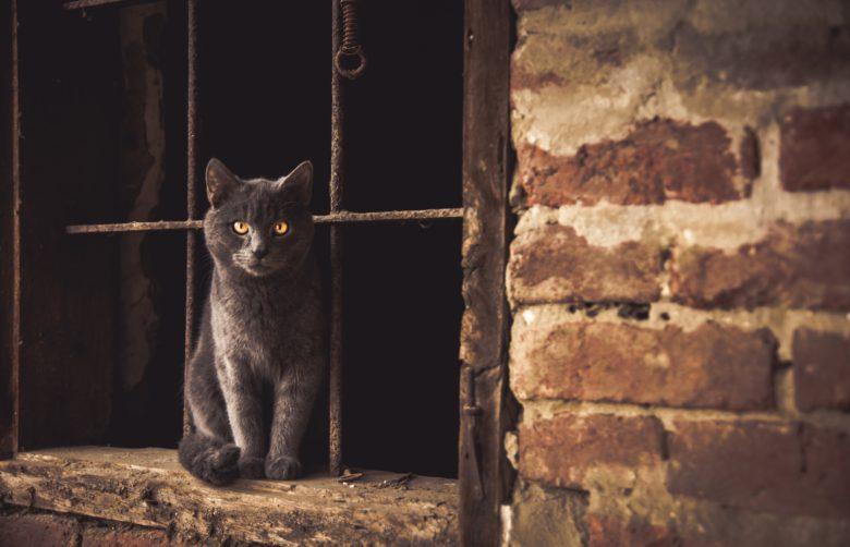 猫足立ち、ではなく猫
