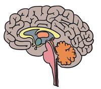 cerebroweb