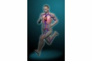 Running-sistema-circulatorio_thumb_e