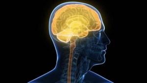 article-hormonas-regulan-rendimiento-54759597a1d37