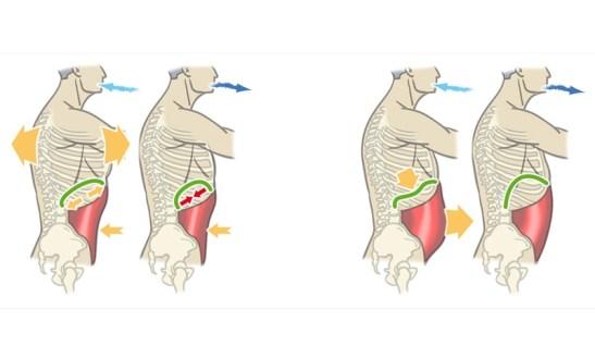 respiracion-abdominal-diafragmatica