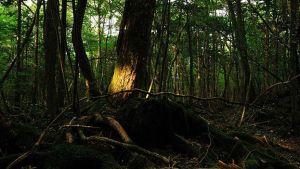 160112231128_japan_aokigahara_forest_624x351_juliancolton_nocredit