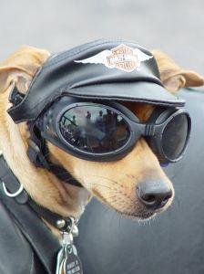 motor-dog