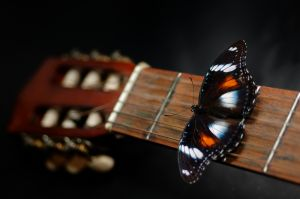 butterfly on guitar