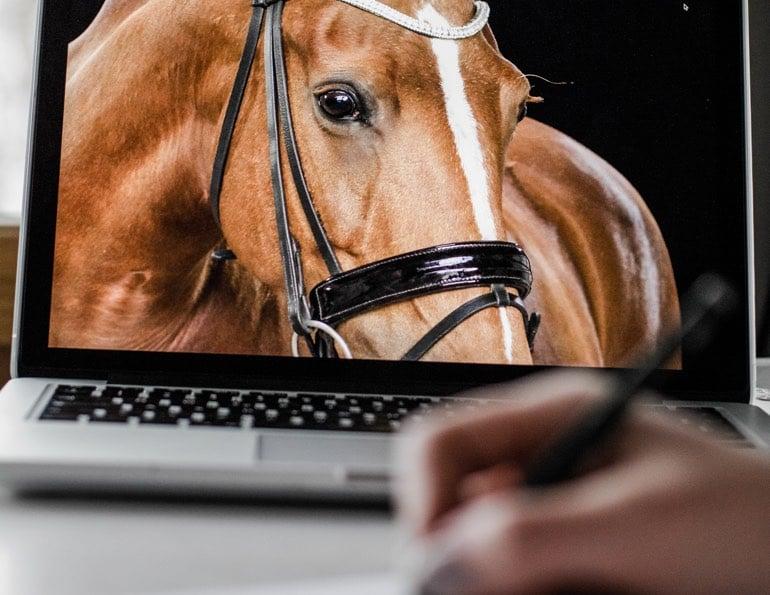 Zeichnung Pferd Qualität Vorlage Pferdezeichnung nach Foto